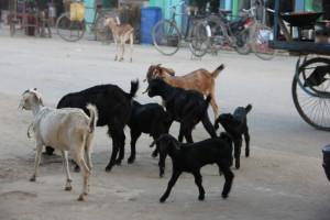 インドとネパールの国境の町にて