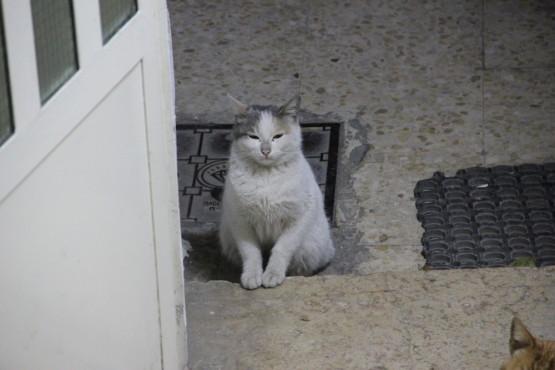 お見送りする猫