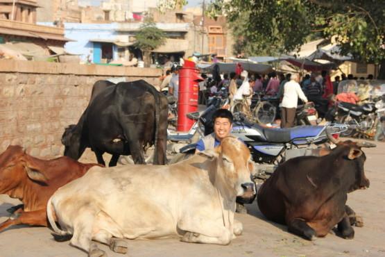 野良牛と一緒にパチリ