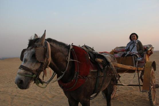 馬車で砂漠側からピラミッドを堪能