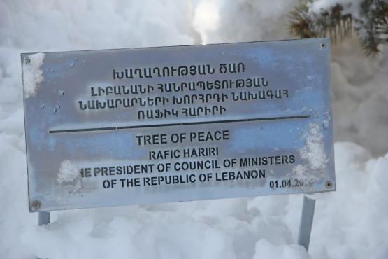 平和を祈って植えられた木