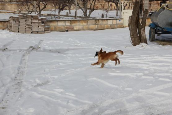 僕の手袋を持って逃げる犬